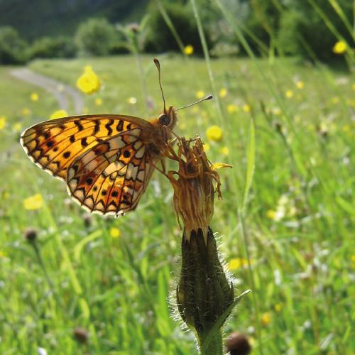 mariposa_conservacion